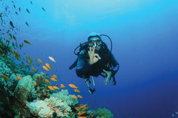dive from shore in the red sea off sharm el sheikh