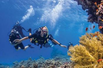 Hurghada tours diving in Hurghada dive in the dolphin house egypt tours