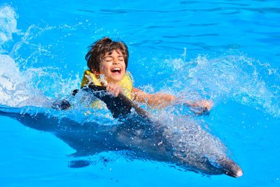 Swim and show with Dolphins in Hurghada